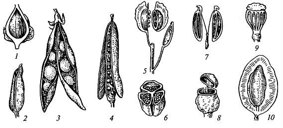 Разнообразие плодов растений